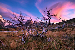 Tree of Life (Jay Daley) Tags: clouds adventure sunrise trees mountains outdoors patagonia chile photography landscape