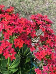 Quiet Day (ktmqi) Tags: florida springhill garden flower bloom