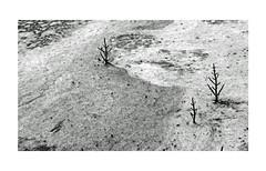 Dans les marais salants (Yvan LEMEUR) Tags: marais maraissalants saliculture salines salicorne guérande loireatlantique sel extérieur nature nb noiretblanc bw blackandwhite bretagne mer