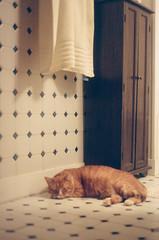 (hamacle) Tags: nikon film n80 f80 slr cat tabby kodak portra 800 color bathroom portrait pet kitty kitten tile white orange paws sleep nap warm house interior design soft grain cute