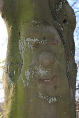 Mr Tree Trunk (zeity121) Tags: sheffield yorkshire botanicalgardens spring tree face