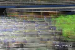 NG_perolanegra_04032019-39 (Nelson Gariba) Tags: anhembi bpp brazilphotopress carnival carnaval riodejaneiro sapucai williamvolcov saopaulo brazil bra
