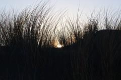 2018 - 11 Noordwijk (Steenvoorde Leen - 11.3 ml views) Tags: 2018 noordwijk noordwijkaandezee sunset zuidholland badplaats