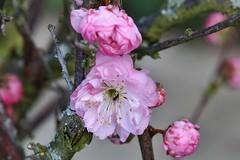 blossom (Hugo von Schreck) Tags: hugovonschreck flower blume blüte macro makro blossom fantasticnature canoneos5dsr onlythebestofnature greatphotographers