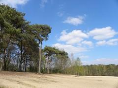Silent spring (simonpfotos) Tags: dutchlandscape