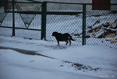 Любомль, Волинь. Січень 2019 107 InterNetri Ukraine (InterNetri) Tags: любомль ukraine україна волинь сніг пес зима снег snow winter