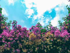 Flower In The Sun (★Aymerich★) Tags: flower sky sun colorful color cielo flores colorido sol aymerich