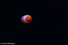 Lunar Eclipse 1 (jarrettmcb) Tags: 2019 jarrettmcbrayer lunar lunareclipse mcbrayer mcbrayerstudios usa canon eclipse edit jarrett lasvegas moon nevada night nv vegas