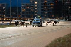 Berlin Trabrennbahn Mariendorf 10.2.2019 (rieblinga) Tags: berlin tempelhof mariendorf trabrennbahn renntag 1022019 8 rennen start pferde sport wetten