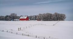 midwestern strong... (Alvin Harp) Tags: february 2019 redbarn farming happyfencefriday hff winterlandscape americanmidwest minnesota i94 sonyilce7rm3 fe70200mmf28 barbwirefences brandonmn milemarker90 alvinharp