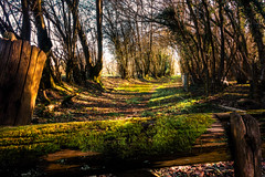 If you go down to the woods today (aquanout) Tags: trees tree wood green yellow kent gate grass forest scenery
