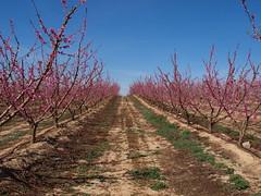 Segrià_Camps d'Aitona_07 (Jordimac) Tags: aitona lagranjadescarp segrià catalunya paisatge patrimonicultural patrimoninatural primavera spring