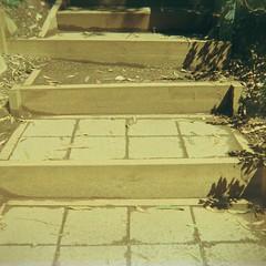 Steps (Matthew Paul Argall) Tags: coronet44 fixedfocus 127 127film squareformat squarephoto rerachrome100 100isofilm slidefilm steps
