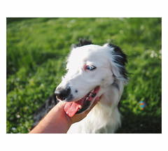 Oggy | Beauzelle (Roxo15) Tags: bokeh chien 17mm12 olympus em5ii animaux dog