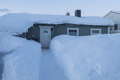 Tromsö 2019 (341 von 699) (pschtzel) Tags: 2019 nordlicht tromsö