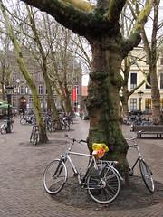 utrecht mariaplaats (gerben more) Tags: utrecht bike bicycle square streetlight tree netherlands nederland