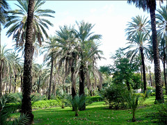 Remembering warmer days.  Sicily. (Country Girl 76) Tags: sicily italy gardens trees palm warm sunshine palermo med island