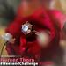 #WeekendChallenge Winner - Noreen Thorn