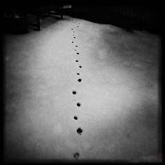 Silent Footsteps (Creepella Gruesome) Tags: iphone6splus hipstamatic nature winter snow footprints squareformat blackandwhite spooky mysterious phantasm