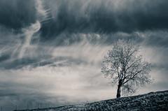 Lonely tree (Janine en Ron) Tags: tree epen zuidlimburg zwartwit dramatic sky nature landscape blackandwhite heuvelland boom eenzame