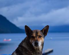 Amigo pasajero (FiRMYYY) Tags: perro dog lago lake portrait retrato callejero street amigo friend mountain montaña sky nubes