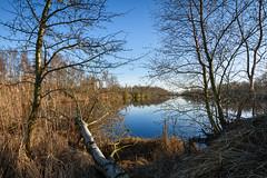 De Haeck (Julysha) Tags: dehaeck lake winter acr zuidholland thenetherlands february trees riet 2019 d810 nikkor1635vr tiffenhtndgrad evening