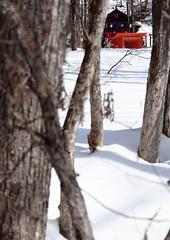Tenmei Inari Shrine at Togakusi in Nagano prefecture (yasushiinanaga) Tags: shrine togakushi naganoprefecture japan winter snow lightandshadow canoneos6d ef2470mmf4lisusm 70mm