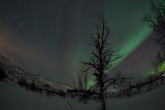 Eine Nacht auf der Insel Ringvassøya unter dem tanzenden Nordlicht (pschtzel) Tags: nordlicht norwegen2019 tromso