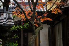 #356 Leaves and roofs (tokyobogue) Tags: tokyo japan akabane inetsukejoato 稲付城 inetsukecastleruins nikon nikond7100 d7100 sigma sigma1750mmexdcoshsm castle ruins autumn leaves orange old traditional momiji maple 365project joshoji joshoshrine shrine