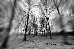 Rotazione fotografica (Gianni Armano) Tags: rotazione fotografica gianni armano photo pioppeto flickr alessandria monferrato
