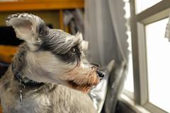 Monday (mingboyyy) Tags: dog 犬