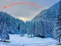 Merry Christmas & Happy New Year (UweBKK (α 77 on )) Tags: merry christmas happy new year 2018 2019 festive season greetings holidays end xmas winter snow forest tree white coniferous hocheck oberaudorf bavaria bayern germany deutschland europe europa iphone