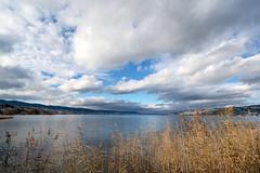 Lake Zurich (Bephep2010) Tags: 2018 7markiii alpha au auzh gräser herbst himmel ilce7m3 lakezurich sel1635z schweiz see sony switzerland wolken zurich zürich zürichsee autumn clouds fall grasses lake sky ⍺7iii kantonzürich ch