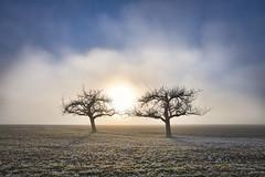 Lichtfänger (SonjaS.) Tags: bäume baum tree sonne sun nebe fog mist sonjasayer weitwinkel zoom land natur eos6dmarkii winter ef24105mmf4lisusm gegenlicht