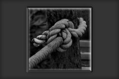 """""""Le Noeud"""" (roger gabriel simon) Tags: bw bnw blackandwhite fineartphotography photography bois corde rope wood tree arbre canon canonpowershotg5x noiretblanc schwarzundweiss design abstract abstrait node"""