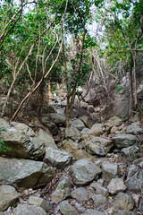 DSC_3839 (sch0705) Tags: hk hiking stream kowloonpeak kowloonpeakhinterland kowloonpeakhinterlandstream