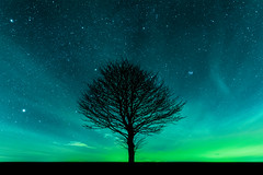 Lone tree under the stars (Andy barclay) Tags: tree tress field landscape nightscape louth lincolnshire uk winter england cold night dark sky star stars milkyway galaxy northstar planets space astro astrophotography long exposure nikon d7100 sigma 1020mm wide superwide