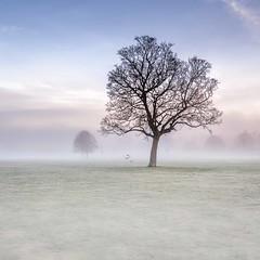Crows Landing (Gary Angus) Tags: nikon scotland fog mist north inch perth tree crows atmosphere moody