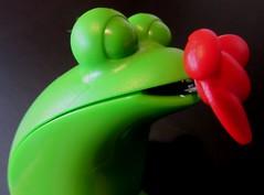 measuring (hussi48) Tags: frosch masband grün green verde lookingcloseonfriday