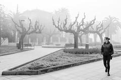 Foggy dream (Luis Alvarez Marra) Tags: tree fog bw black white monochrome candid street streettog tog collecting soul outdoor decisve moment nikon d7000 prime 24mm spain catalonia salou