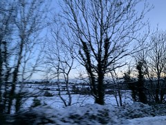 Snow Day (firehouse.ie) Tags: vegetation wintery nature snowscapes landscapes landscape ireland countycork countryside rural trees tree scene snowing snowscape snow