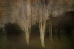 Breath of Trees (Ger208k) Tags: ireland dublin stannespark intentionalcameramovement icm blur trees multipleexposure landscape gerardmcgrath