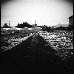 畑 (frenchvalve) Tags: 雪 畑 二眼レフ film filmphotography analog 120 120rollfilm 6x6 mediumformat monochrome bnw snow tlr