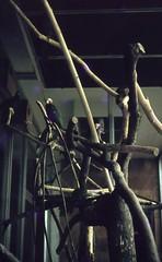 Ost-Berlin - Im Tierpark Friedrichsfelde 1965 (Seesturm) Tags: 1965 seesturm berlin ostberlin tierpark zoo friedrichsfelde dathe alfredbrehmhaus tiger giraffe flamingo flamingos cafeteria brehm alfredbrehm deutschland germany
