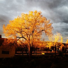 Morning Light (Robert_Brown [bracketed]) Tags: robertbrown silvercity newmexico nm morninglight goldenhour tree clouds landscape color samsungs8 s8 cellphone instagram orange