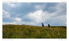 Puy de Chambourguet [PdD] (BerColly) Tags: france auvergne puydedome puy chambourguet montagne mountain ciel sky nauges clouds herge grass gentiane randonnée hiking fleurs flowers sancy bercolly google flickr
