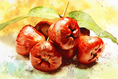 Sweet (zilvadesigns) Tags: painting food illustration sweet delicious artistic asian fruit macro still life sketch red watercolor design fresh jambu rose tropical syzygium colors colorful bright eyecatching handdrawing handdrawn waxapple brush stroke realistic wet dry splatter edible beautiful