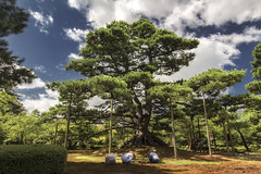 Neagarinomatsu Pine, Kenrokuen Garden - Kanazawa (Japan) (Andrea Moscato) Tags: andreamoscato giappone japan asia japanese 日本 nihon nippon asian light luce green shadow ombre prefecture attraction ombra site national nature natura natural naturale landscape paesaggio day white view vivid vista scenic blue parco park trees history historic ancient wood art rock giardino people clouds nuvole sky cielo blu pine tree albero