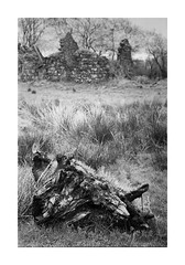 Bog Oak and Ruin (fudgefishmono) Tags: olympus om4 kodak trix 800 pushed selfdeveloped ballymoney coantrim northernireland xtol zuiko 50mm analogue blackandwhite scan