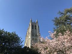 Washington National Cathedral (KFiabane) Tags: nationalcathedral washingtondc spring